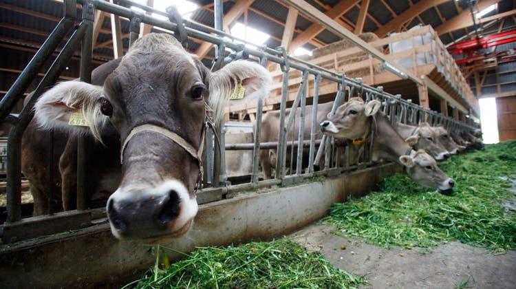 Die Änderung desTierarzneimittelrechts würde beispielsweise Nutztiere betreffen (Symbolbild). (Donato Caspari)
