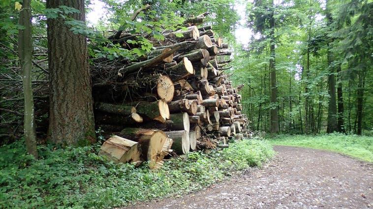 Scheitert die Forstfusion Forstbetrieb Suhrental Ruedertal? Holziken, Reitnau und Schmiedrued gehen bereits eigene Wege (Symbolbild imSeoner Wald 2021). (Cynthia Mira)