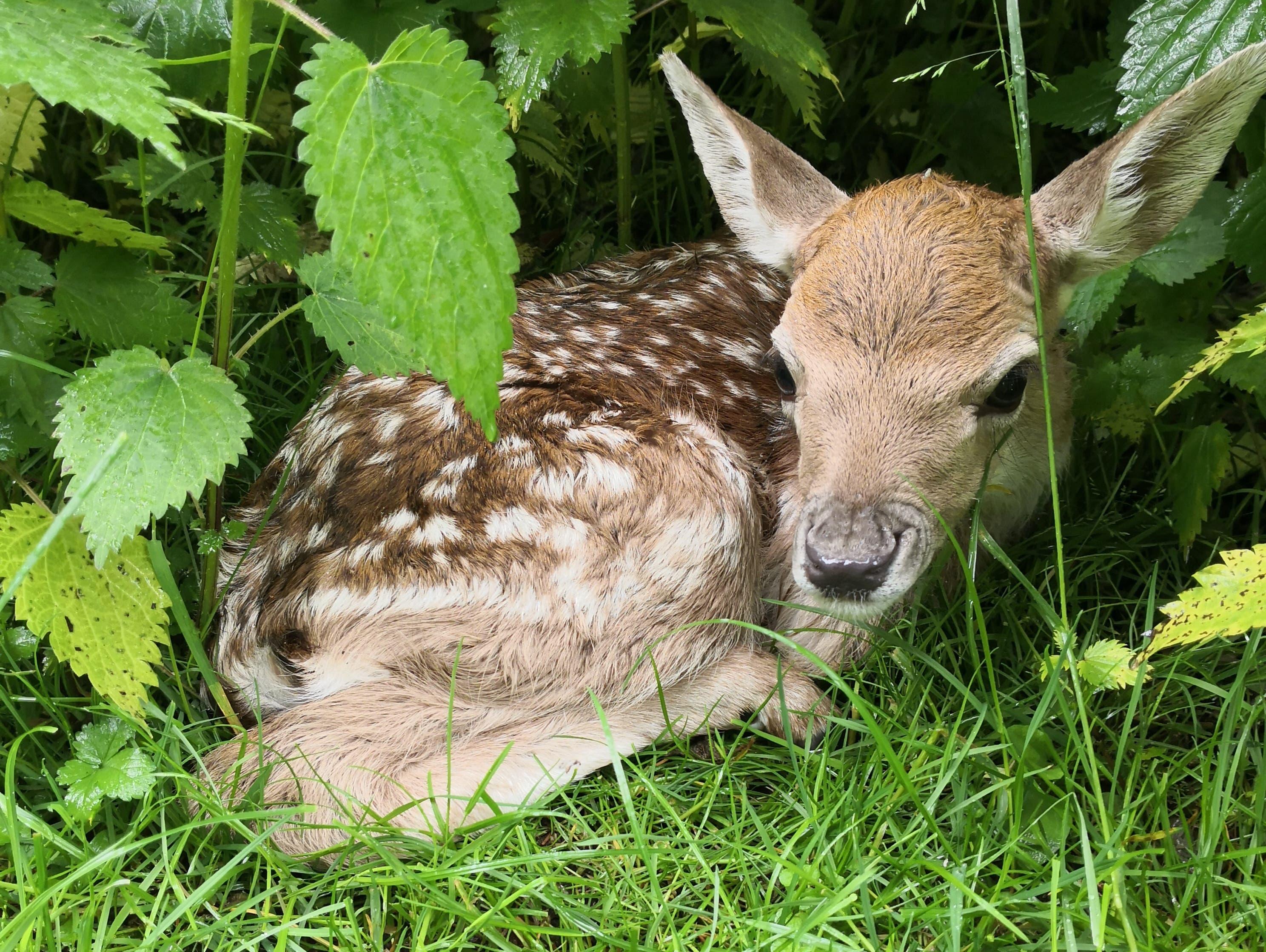 Das Jungtier wurde erst vor wenigen Wochen geboren.