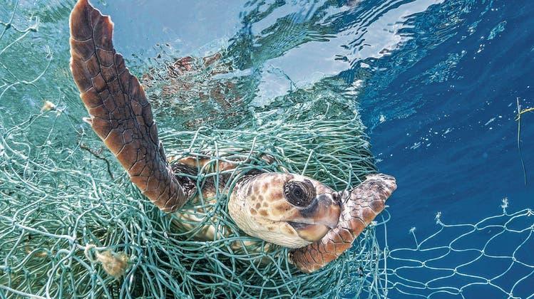 Im Meer sind verlorene Fischernetze gefährlich für Tiere, an Land werden sie zu hochwertigem Nylon. (Bild: Imago)