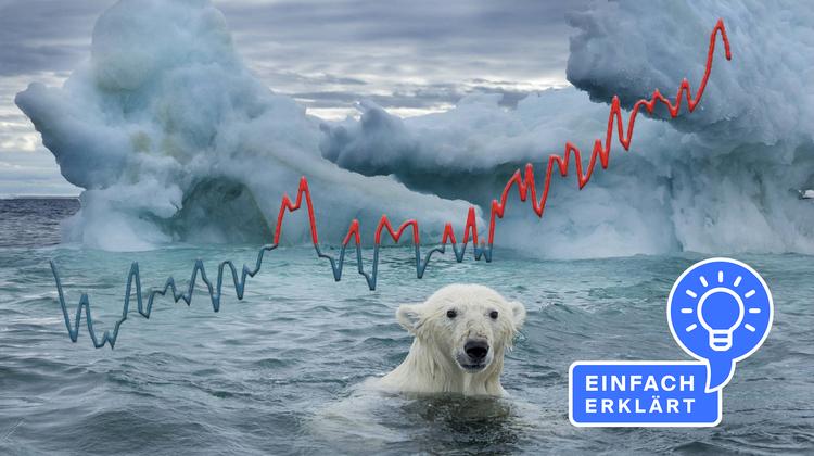Den Eisbären schmilzt ihr Lebensraum unter den Füssen weg. (Bild: Imago Images, Grafik: TBM)