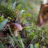 Feuchtigkeit begünstigt den Wachstum von Pilzen. (Bild: Boris Bürgisser (Fräkmüntegg, 20. September 2018))