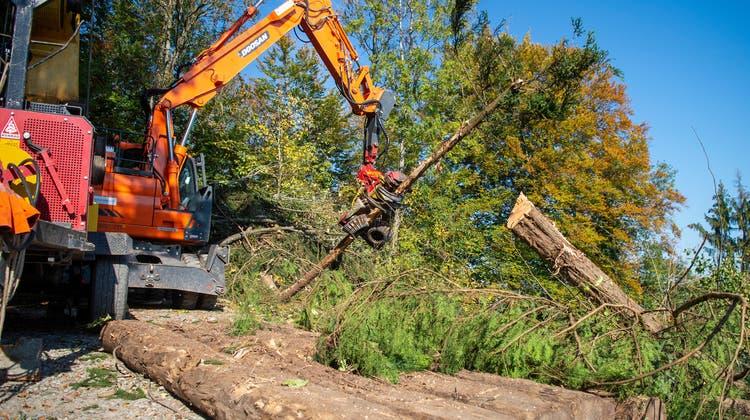 Der Bundesrat will die Rahmenbedingungen für die Waldbewirtschaftung verbessern. (Symbolbild) (Keystone)