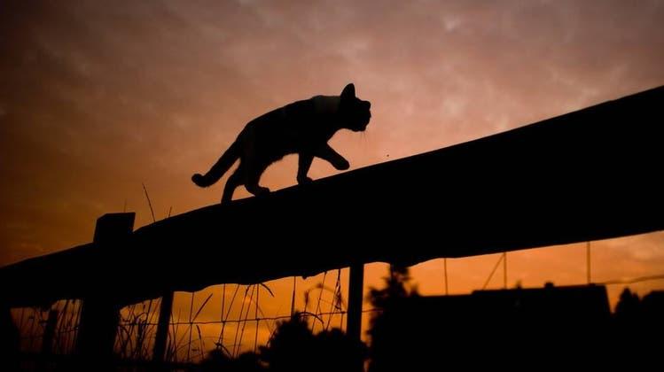 Schwarze Katzen sind für viele ein Unglückssymbol. (Keystone)