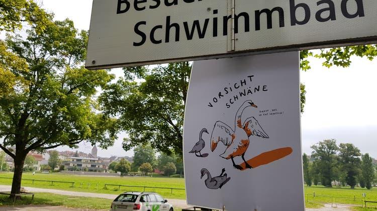 Auf dem Bad-Parkplatz wurden junge Schwäne überfahren. Nun wurden Plakate aufgehängt, um Autofahrer zu warnen. (Nadja Rohner)