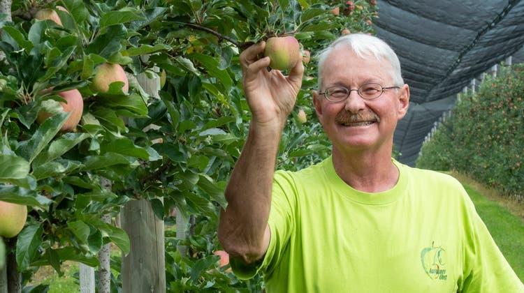 Apfelbauer Meinrad Suter hat gut lachen in seiner Plantage in Münzlishausen auf der Baldegg: Der Regen hat das Obst kaum beschädigt. (Bild: Alex Spichale)