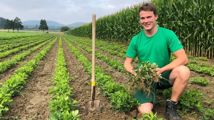 Landwirt Fabian Salm auf einem der beiden Erdnussfelder auf dem elterlichen Hof in Lenzburg. (Florian Wicki)