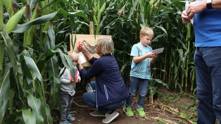 Nicole Sozzi, Geschäftsführerin der Fahr Erlebnis AG, zieht bezüglich des Betriebs des Maislabyrinths ein positives Zwischenfazit. (Severin Bigler)