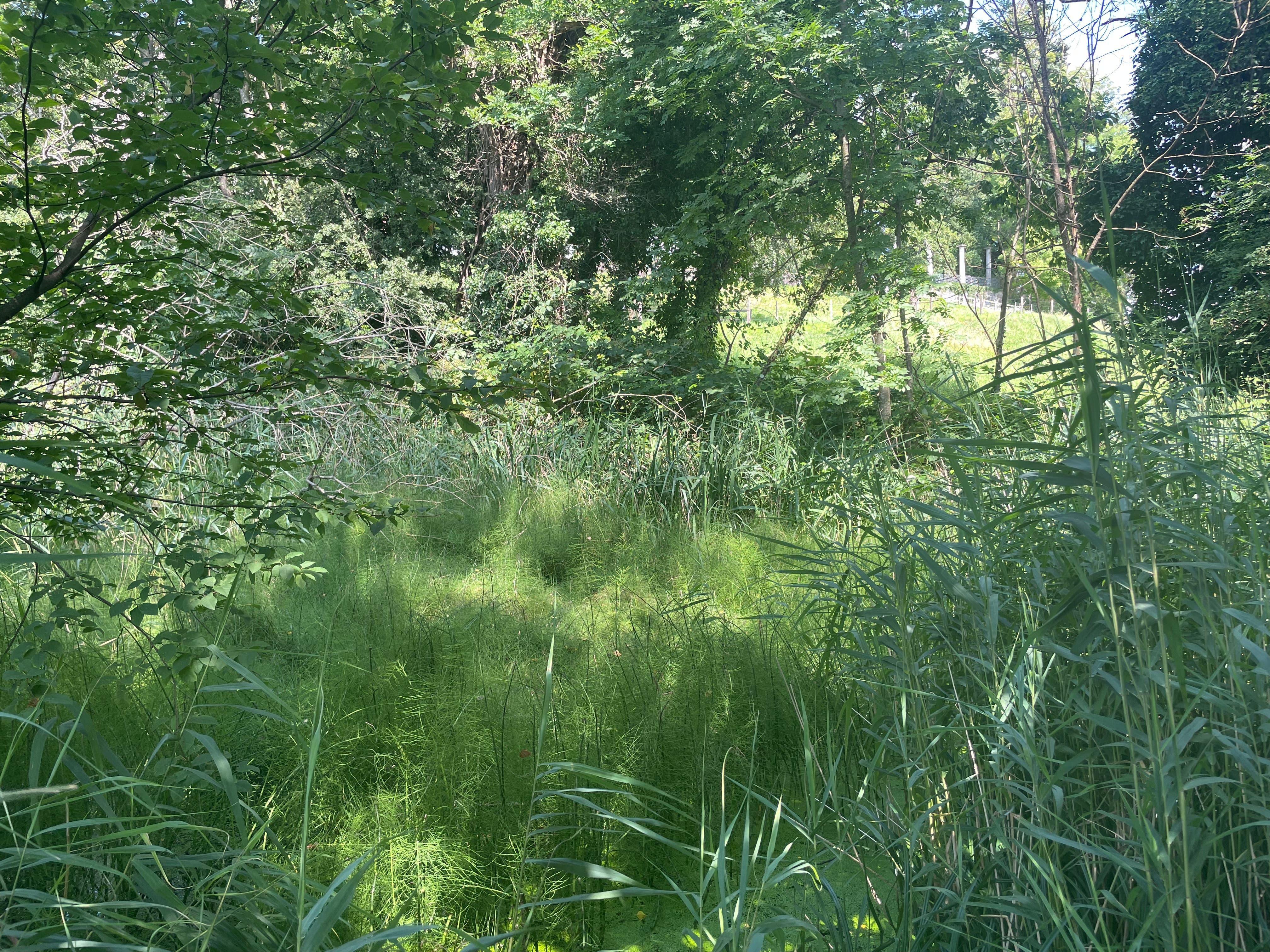 Bäume schirmen den Sparrenbergweiher von der Aussenwelt ab und machen ihn zu einem gut versteckten Biotop.