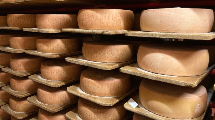 Die Zulieferer bringen den Käse direkt in den Naturkäsekeller der Sutters in Brülisau (AI). (Bilder: hck)