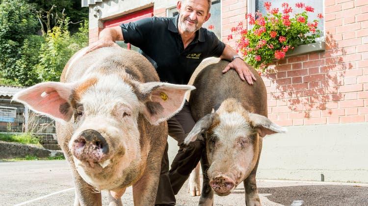 Aus dem Schönheitsschlaf geweckt. Züchter Markus Dettwiler präsentiert stolz den frechen Farni (links) und den etwas scheuen Burgi. (Nicole Nars-Zimmer)