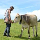 Auf der Alpweide tummeln sich Rinder verschiedener Rassen. (Bild: Corinne Hanselmann)