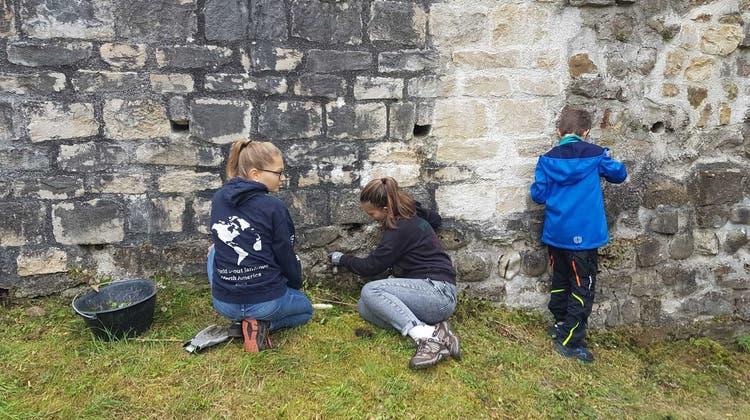 Rund 20 Pfadi-Kinder rissen Pflanzen aus den Mauern der Ruine ob Tegerfelden. (zvg)