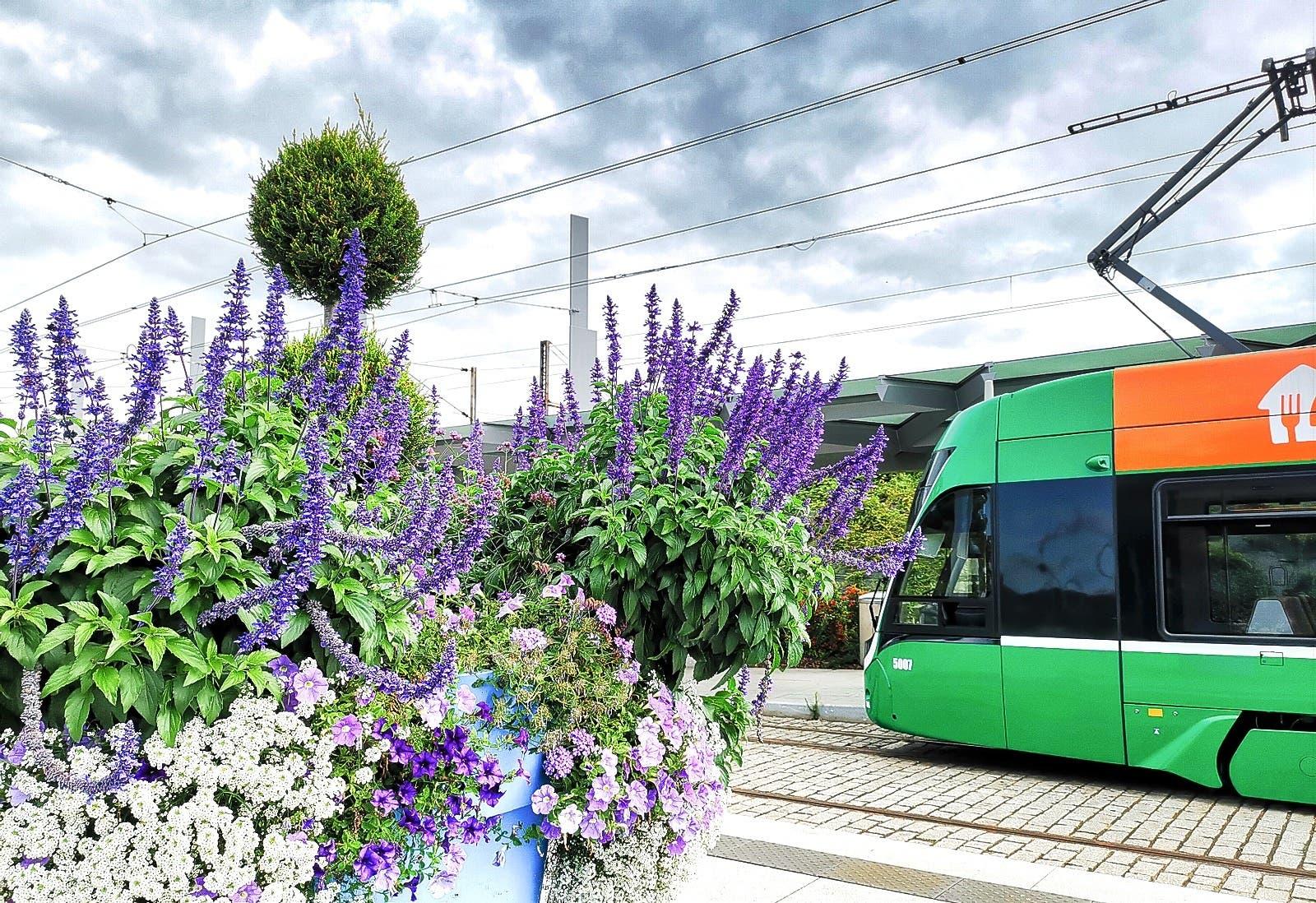 Basler Trämli Passagiere werden am Bahnhof St. Louis (F) mit bunten Blumen begrüsst...