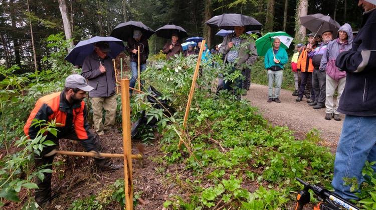 Forstwart Michael Steiner zeigt, welches Werkzeug sich für Baumpflanzungen eignet. (Bild: Werner Ulrich)