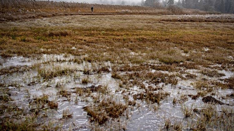 Die Moorlandschaft des Pfäffikersees ist ein national geschützte Gebiet. (Keystone)