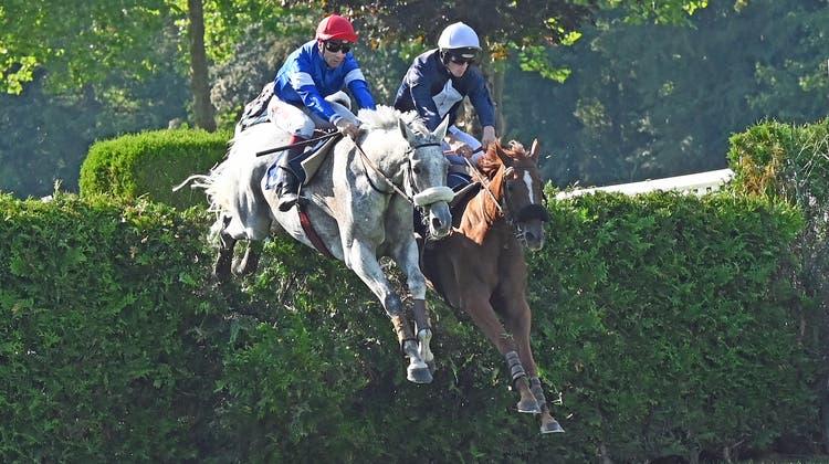 Sieger Baraka de Thaix (links) und Bergerac beim zweiten Tribünensprung. (Ueli Wild)