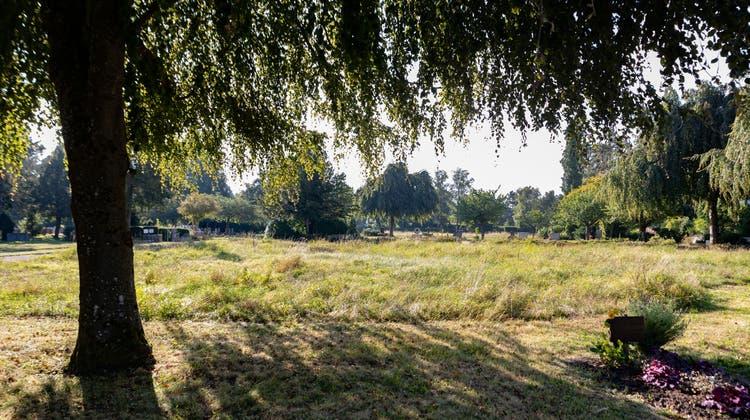 Naturnahe Magerwiese anstatt ein gemähter Rasen. Auf dem Friedhof St. Katharinen wird die Biodiversität gefördert. (Tom Ulrich)
