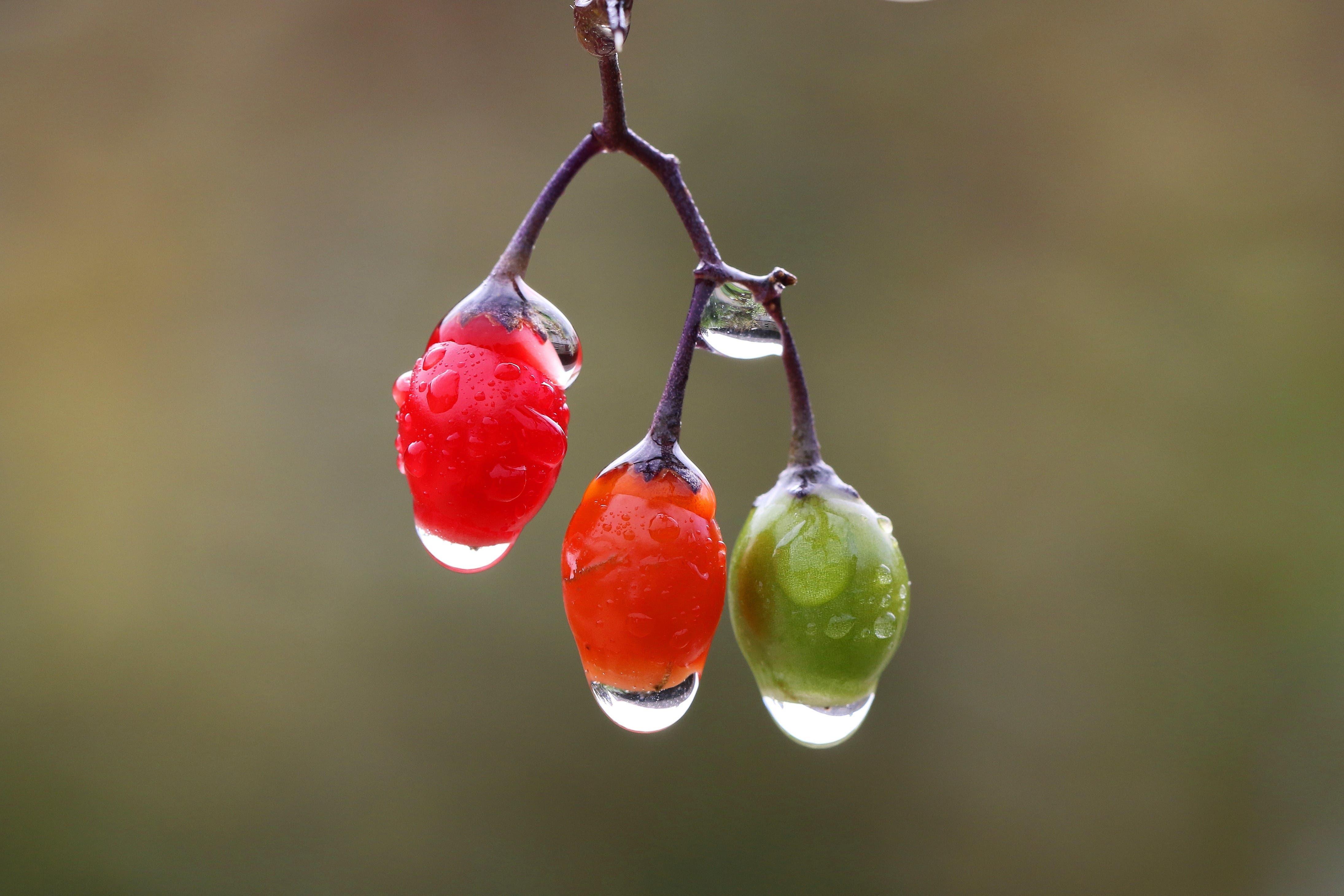 Dekorativ präsentiert sich die Natur nach dem Regen in den Merian Gärten von Basel.