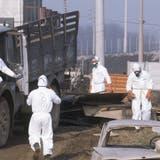 Selbst ein Jahr nach dem Chemieunfall in Seveso waren Arbeiter noch mit Entseuchungsaufgaben beschäftigt. (Keystone / Photopress-Archiv)