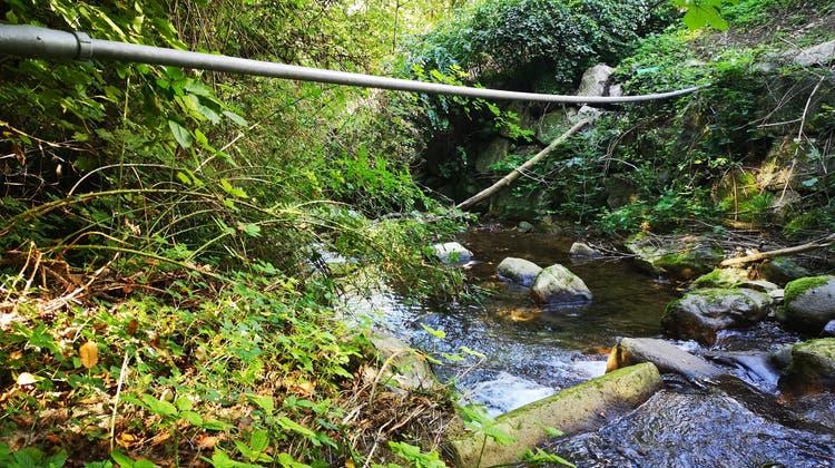 Die Wasserleitung, ein Metallrohr in der Dimension eines Gartenschlauchs, führt gut versteckt über den Meisterschwander Dorfbach. (Urs Helbling / Aargauer Zeitung)