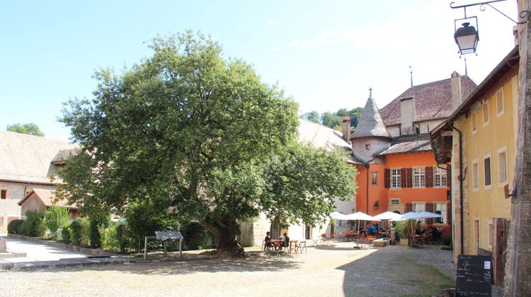 Kirchgemeindeausflug nach Romainmôtier