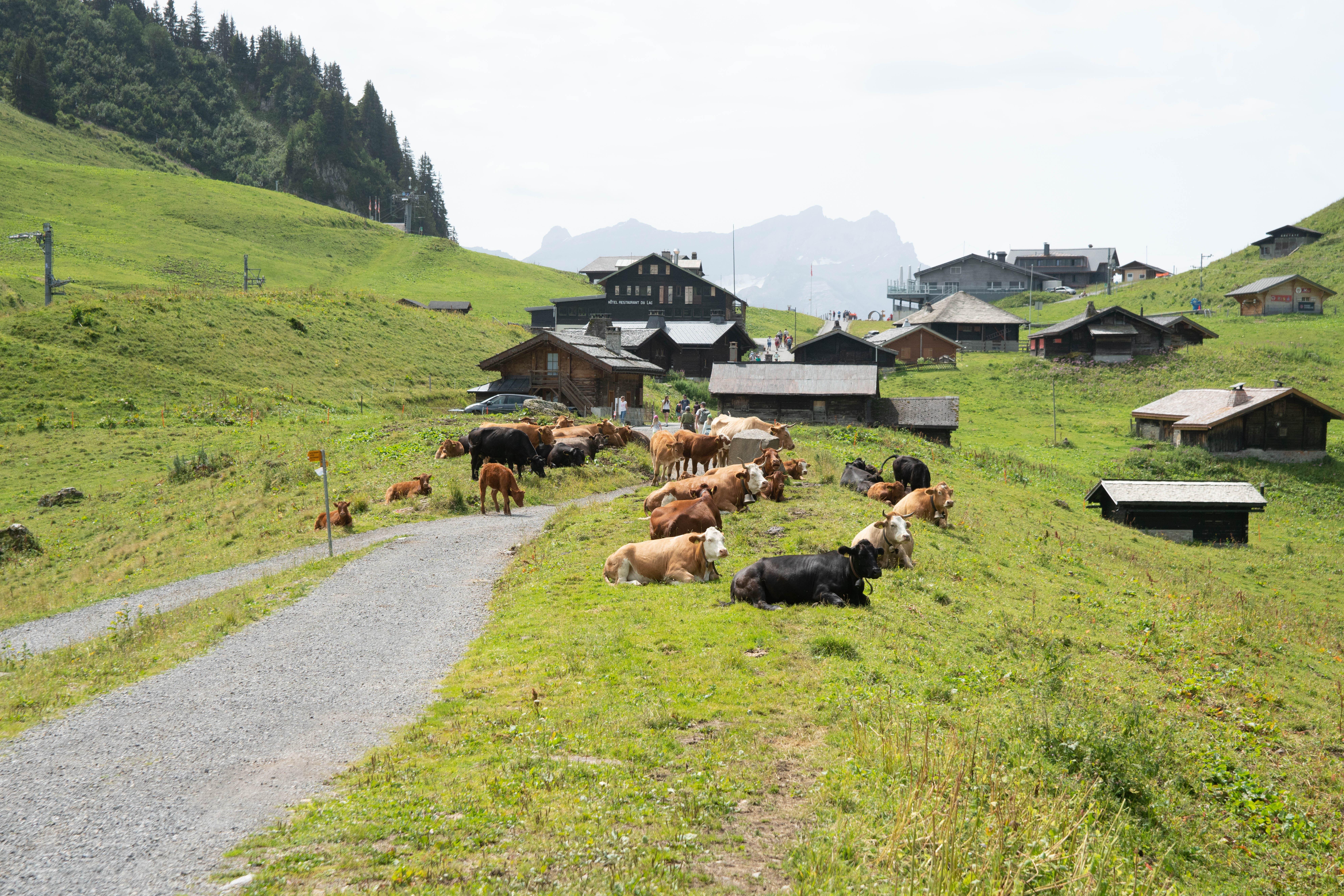 Unterwegs präsentiert sich die waadtländer Bergwelt.