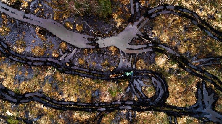 In Estland wird deutlich zu viel Wald gerodet. (Karl Ander Adami)