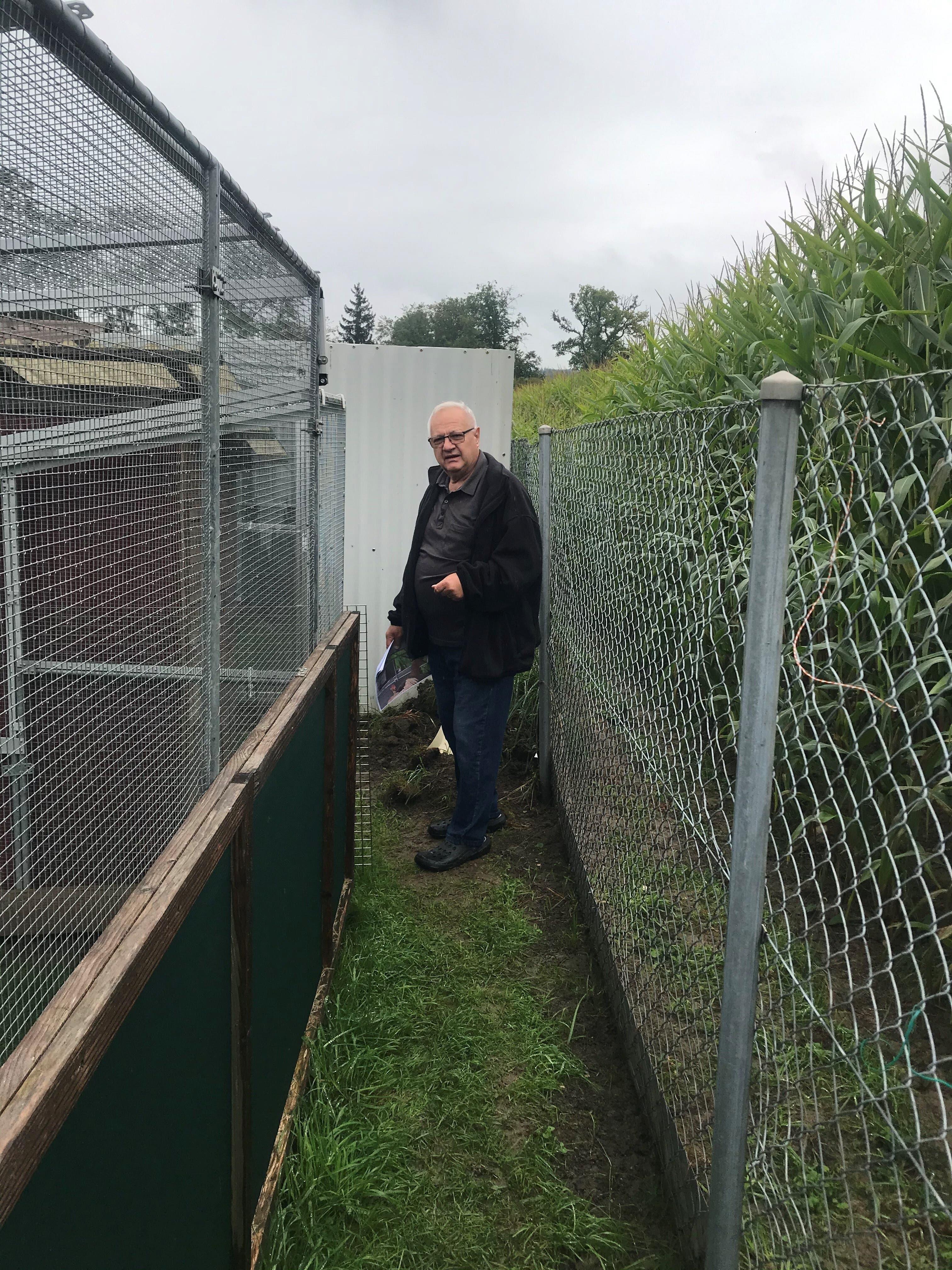 Hoher Zaun schirmt das Gehege vom Maisfeld ab: In dieses Feld warfen die Einbrecher die Hühner.