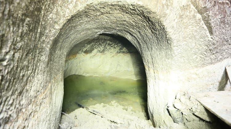 Nach dem Sturz von Kuh Belinda wurde das Gewölbe im Habsburger Untergrund entdeckt. (Pro Natura / Philipp Schuppli)