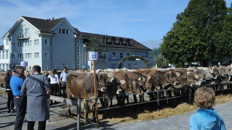 An der diesjährigen Viehschau in Teufen wurden 270 Kühe gezeigt. (Bild: Astrid Zysset)