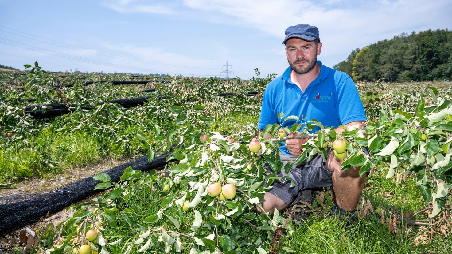 Bild der Verwüstung: Im Juli zerstörten Hagel und Winde Markus Mörgelisgesamte Apfelplantage. (Alex Spichale (23. Juli 2021))