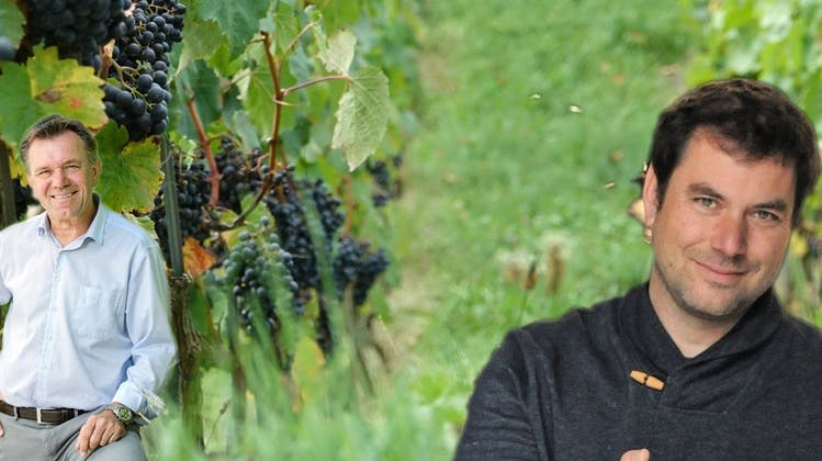 Der falsche Mehltau hat den Weinreben in Döttingen stark zugesetzt. (Archiv/Ursula Burgherr)