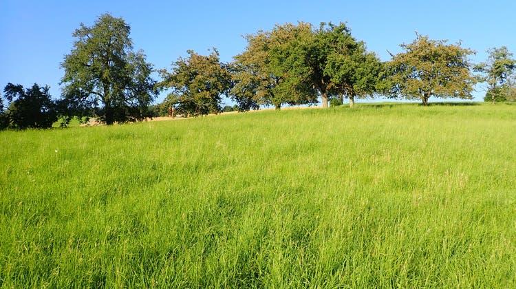 Bauland «Mairüti» ob Zetzwil wird definitiv eine Landwirtschaftszone. (Cynthia Mira / Aargauer Zeitung)