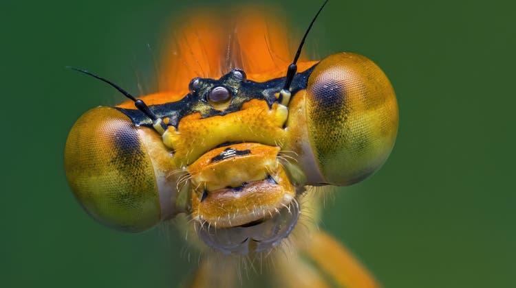 Insekten auf dem Rückzug: Retten, was noch zu retten ist