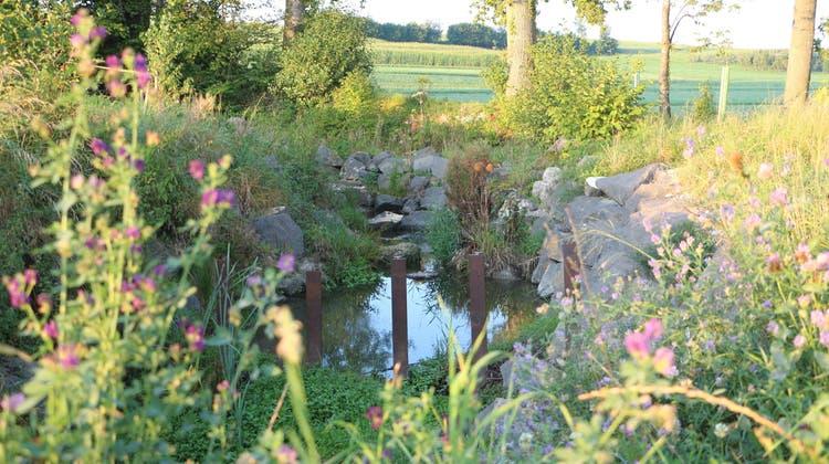 Bereits ausgeführte Hochwasser-Schutzmassnahmen am Eidbach. (Bild: Hannelore Bruderer(Elen, September 2021))