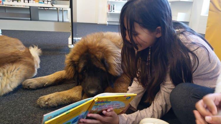 Mit einem Lesehund an der Seite können Kinder ihre Hemmungen, Schwächen und Ängste loslassen. (Bild: PD)